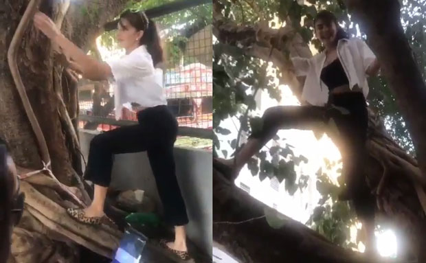 WOW! Jacqueline Fernandez climbs and dances on top of a tree for a good cause