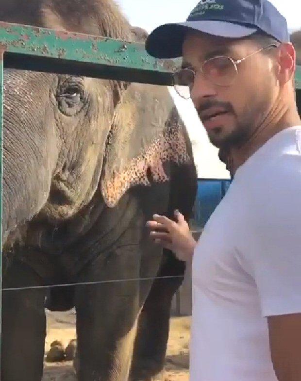 On World Animal Day, Sidharth Malhotra urges fans to adopt and provide basic needs to animals