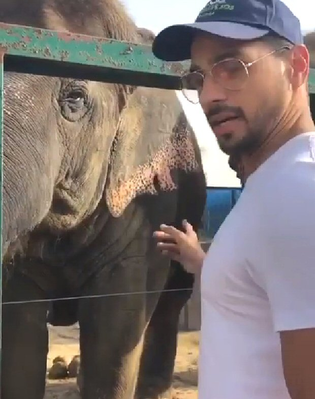 On World Animal Day, Sidharth Malhotra urges fans to adopt and provide basic needs to animals