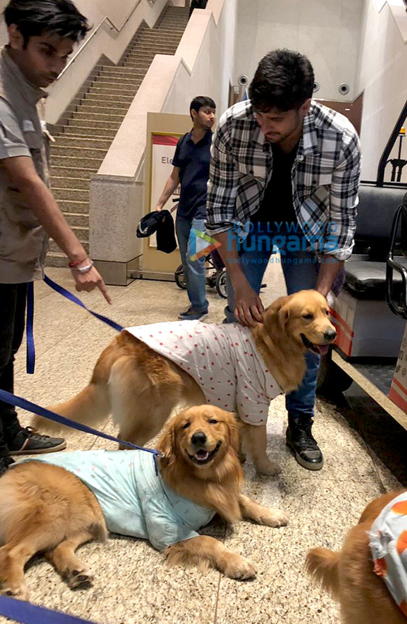 Sidharth Malhotra snapped with Therapy Dogs at the airport