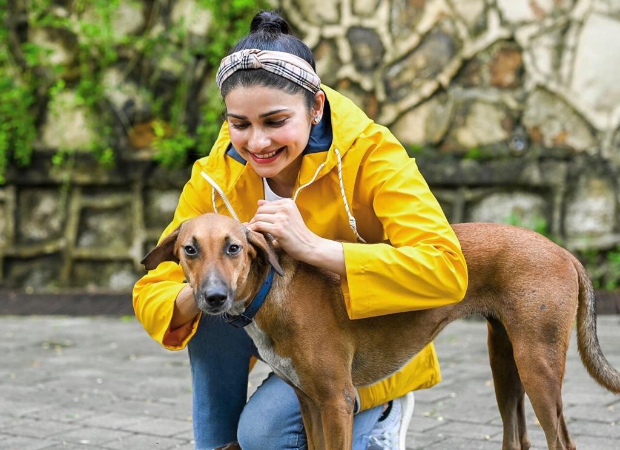 """""""Sometimes all you need is love,"""" writes Prachi Desai sharing pictures of strays from her building"""